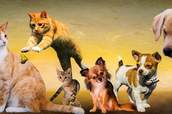L'aloe Vera per il benessere del cane e del gatto