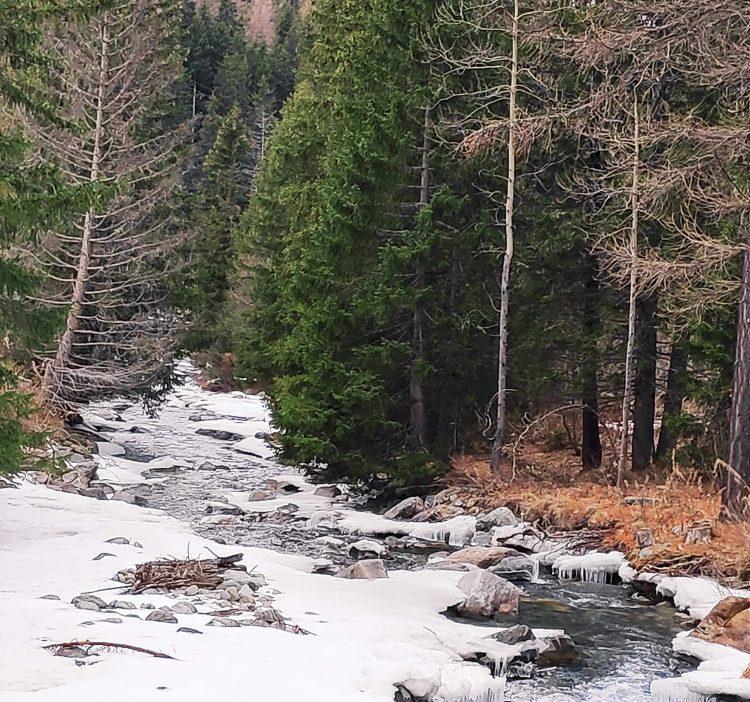 freddo e neve a gennaio